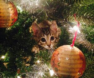 beautiful, cat, and christmas image