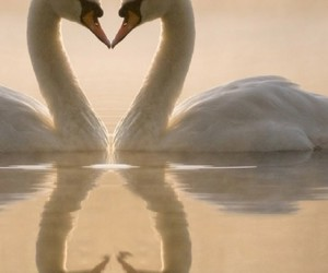 love, heart, and swans image
