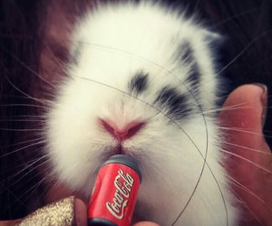 bubble, bunny, and coca cola image