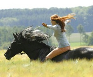 horse, freedom, and ostwind image