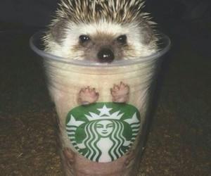 cute, starbucks, and animal image