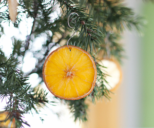 christmas and citrus image