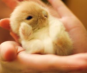 animal, bunny, and little image