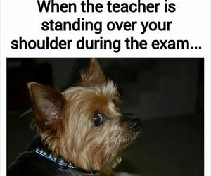 school, exam, and dog image