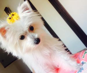 chic, doggie, and pretty image
