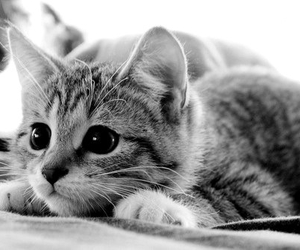 adorable, animals, and black and white image