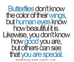 quote, butterfly, and special image