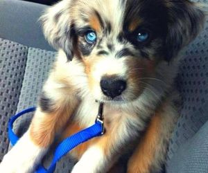 dog, small, and cute image