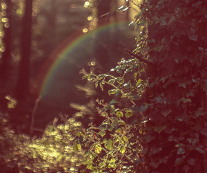 nature, rainbow, and forest image