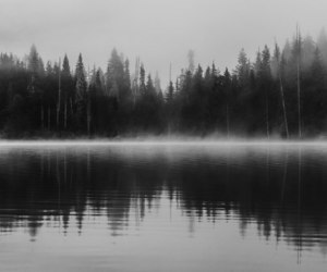 fog, lake, and nature image