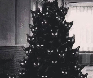 cat, christmas, and black image
