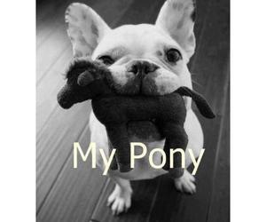 animals, pony, and dog image
