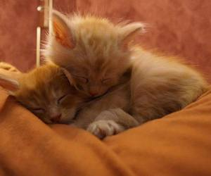 cats, cuddles, and kittens image