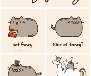 cat, fancy, and inspiration image