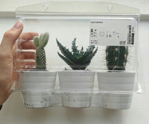 plants, cactus, and pale image