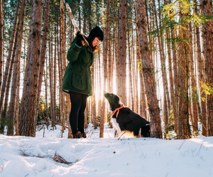 border collie, snow, and woods image