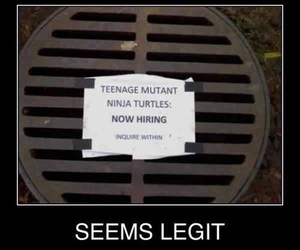 funny, hire, and lol image