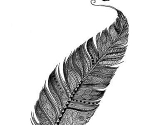feather, art, and bird image
