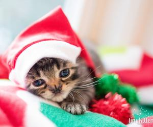 Marvel, ready for christmas, and the kitty image