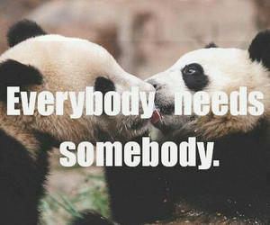 panda, love, and everybody image