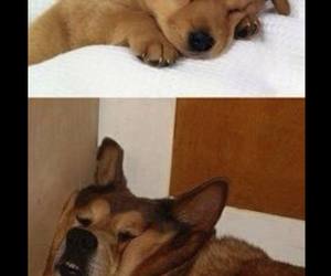 dog, funny, and cute image
