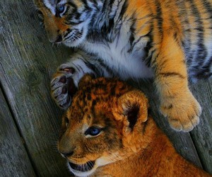 cute, adorable, and animals image