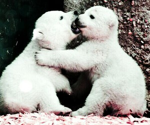 bears, polar bears, and twins image