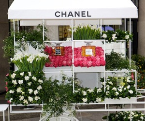 beautiful, photography, and chanel image