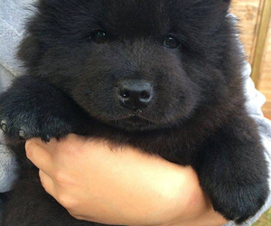 cute, dog, and black image