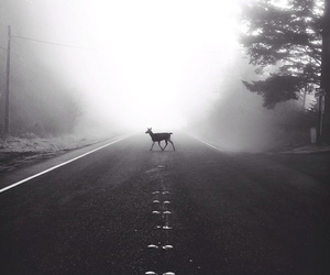 black, deer, and road image