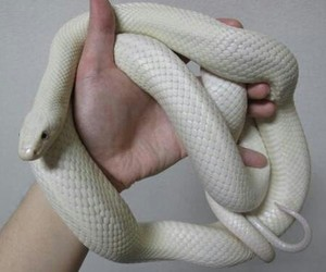 grunge, pale, and snake image