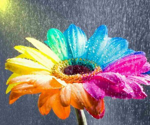 colour and flower image