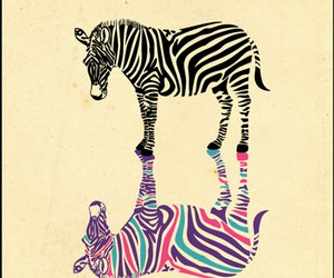 zebra, colors, and animal image