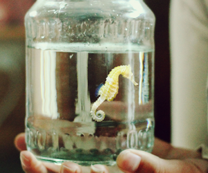 seahorse, water, and animal image