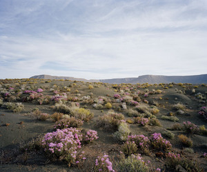 landscape, nature, and flowers image