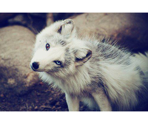 animal, wolf, and cute image