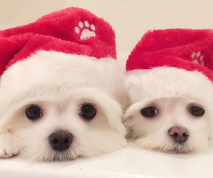 dog, xmas, and cute image
