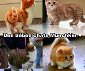 amusing, cat, and chat image