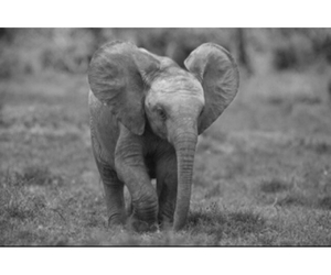 animals, elephant, and cute image