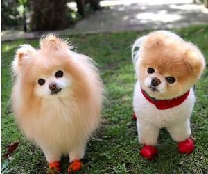 dog, boo, and cute image