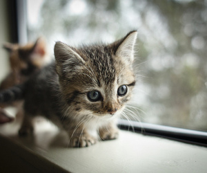 window, cats, and cute image