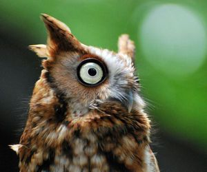 owl and national geographic image
