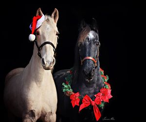horse, animals, and christmas image