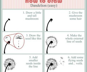dandelion and how to image