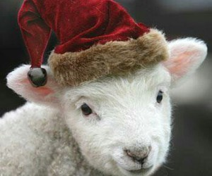 animal, christmas, and lamb image