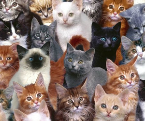 cats, cute, and a lot of them image