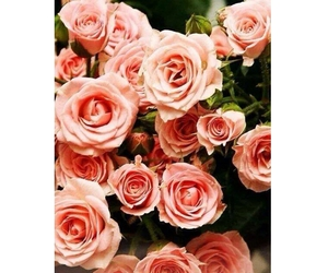 flowers, rose, and quotes image