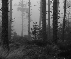 black and white, trees, and nature image