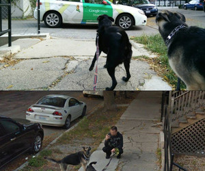 dogs and google street view image
