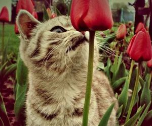 cat, kitten, and tulip image